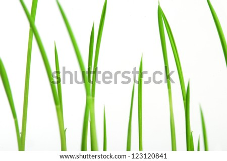 Young plants close up white isolated - stock photo