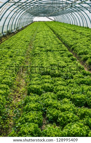 Young plants growing in a very large plant nursery in the france