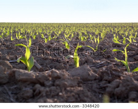 Young plants in large field - stock photo