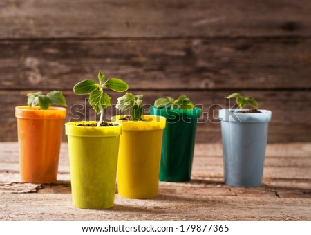 Young plants in pots on wooden background - stock photo