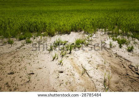 Young plants struggling to grow in sandy soil - stock photo
