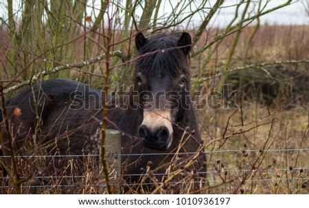 young pony in looking over fence surounded by plants.