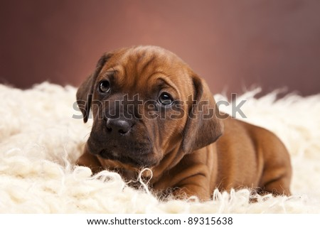 Young pretty dog portrait on blanket - stock photo