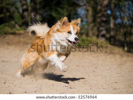 Young puppy running fast - stock photo