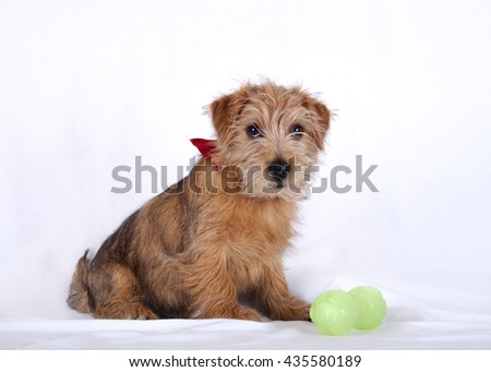 Young puppy sitting beside a green plastic toy - stock photo
