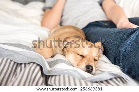 Young Puppy Sleeping After Playing with His Human - stock photo