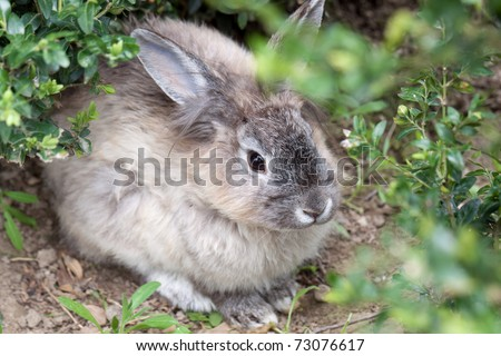 Young rabbit in the garden