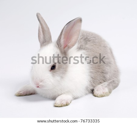 young rabbit siting on the plain background - stock photo