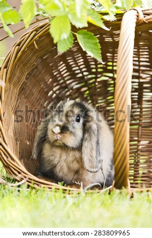 young rabbit sitting in a basket on grass in the garden