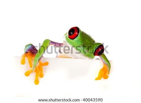 Young red eyed tree frog isolated on a white page