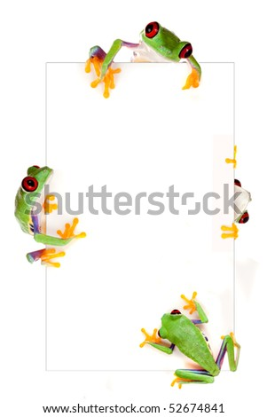 Young red eyed tree frog isolated on a white page as a border frame