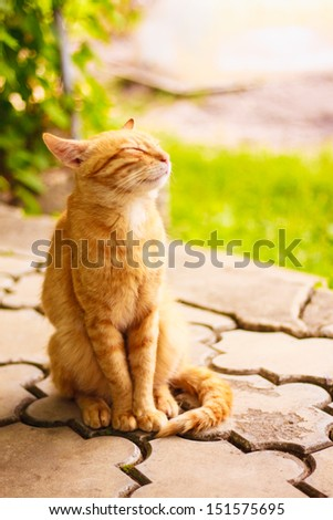 Young Red Kitten Sleeping Outdoor - stock photo
