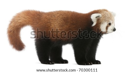 fulgens or shining - photo #27