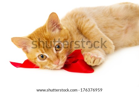 young redhead cat wearing a red ribbon lies on the floor isolated on white background - stock photo