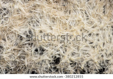 Young roots are grown wheat close background - stock photo