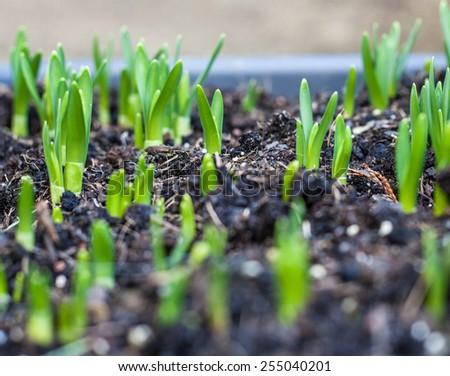 Young seedling growing - stock photo