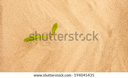 Young seedling growing in a desert sand - stock photo