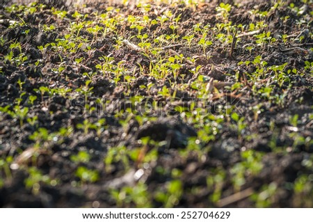 Young seedling sprout growing with water spray in sunlight - stock photo