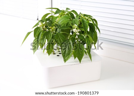Young seedlings in pot on window sill - stock photo