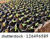 Young seedlings in the soil in small pots - stock photo