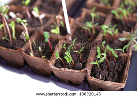 Young seedlings in tray on window sill - stock photo