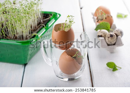 Young seedlings of cress salad in an eggshell. Easter decoration. - stock photo