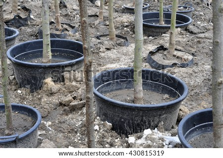 Young seedlings of trees in pots in the summer park.