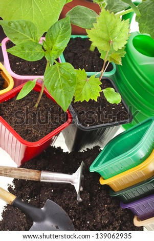 Young  Seedlings Sprouts and colored pots  isolated on white background