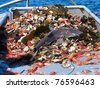 young shark as bycatch in industrial fishing, this specimen was released back into the water - stock photo