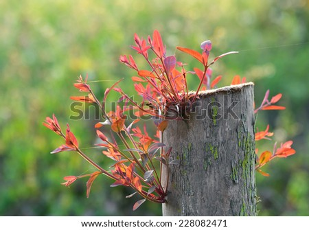 Young shoot on an old stump over Natural background - stock photo