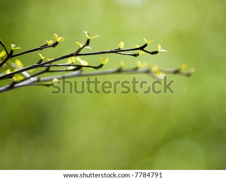 Young Shoots - stock photo
