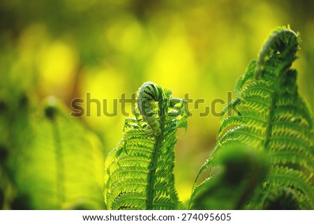 Young shoots of ferns illuminated by sunlight
