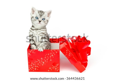 Young silver tabby cat standing in red box with stars isolated on white background - stock photo