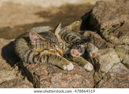 young sleeping small wild cat