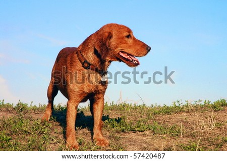 Young sloppy dog standing on the grass - stock photo