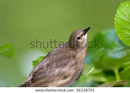 Young sparrow - stock photo