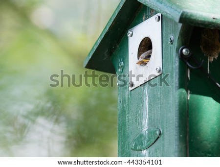 Young sparrow sitting in a green birdhouse