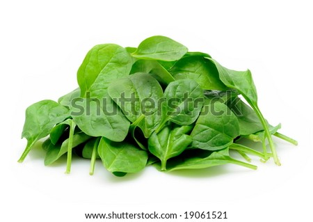 Young spinach leaves in isolated white background - stock photo