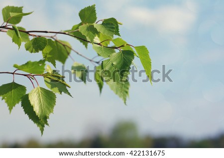 Young spring birch branches against the sky, spring background - stock photo