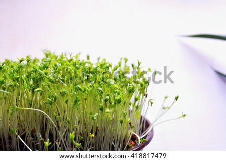 young spring herbs-watercress, white background  - stock photo