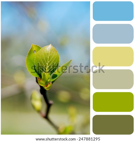 young spring sprout, color palette for your design  - stock photo