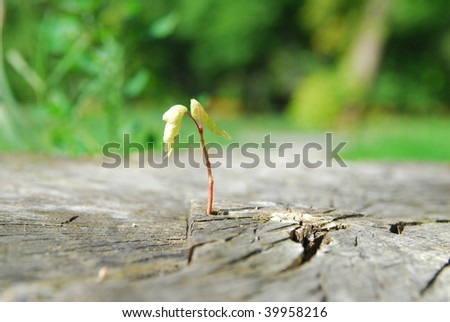 Young sprout growing in old cutting stub