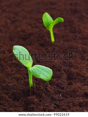 Young sprout in the ground - stock photo