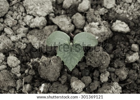 Young sprout is on the ground in the spring. - stock photo
