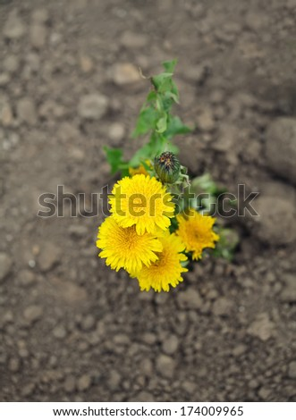 Young sprout makes the way through sand  - stock photo