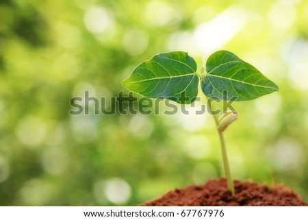 Young sprout on green background in the sunlight - stock photo