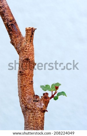 young sprout on the tree - stock photo