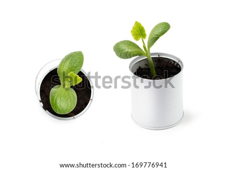 Young sprout pumpkin in a tin, top and side views - stock photo