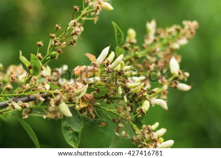 Young sprouts growing on tree - stock photo