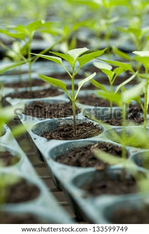 Young sprouts in nursery tray wait for planting - stock photo